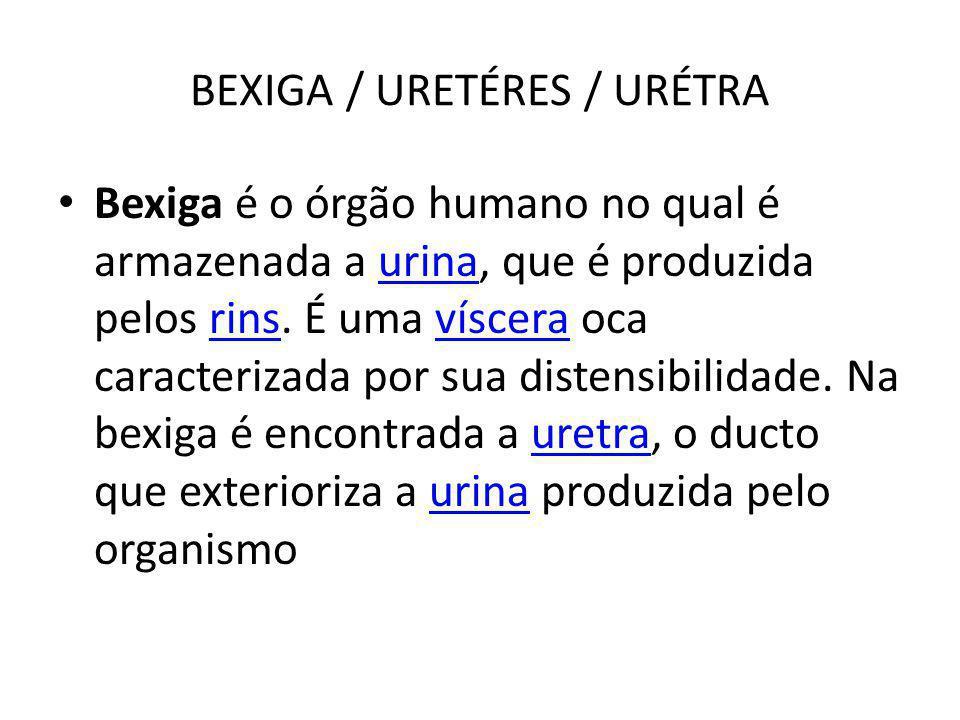 BEXIGA / URETÉRES / URÉTRA