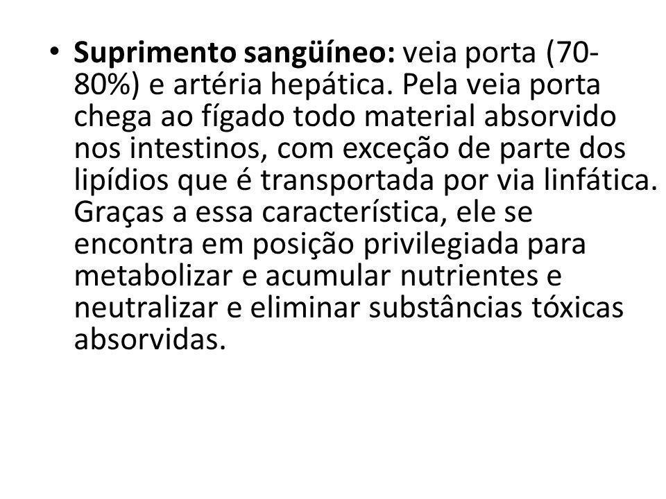 Suprimento sangüíneo: veia porta (70-80%) e artéria hepática