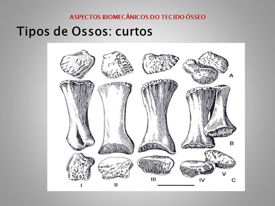 ASPECTOS BIOMECÂNICOS DO TECIDO ÓSSEO