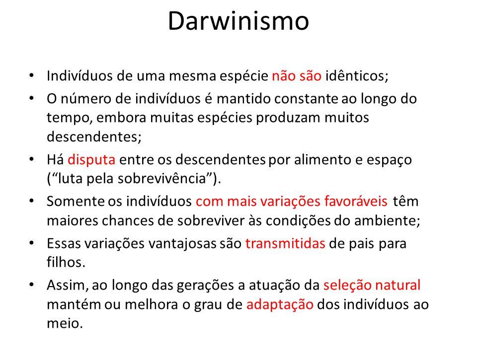 Darwinismo Indivíduos de uma mesma espécie não são idênticos;