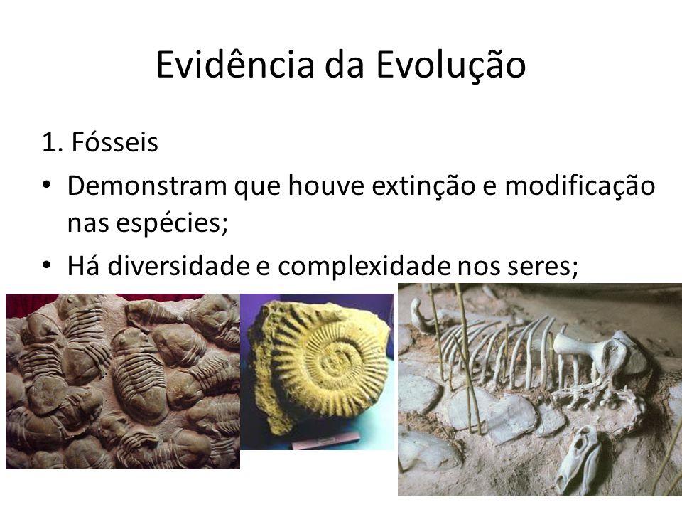 Evidência da Evolução 1. Fósseis