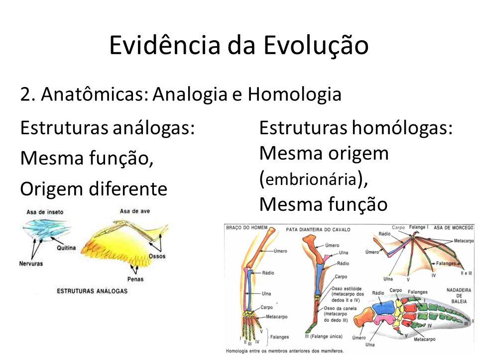 Evidência da Evolução 2. Anatômicas: Analogia e Homologia