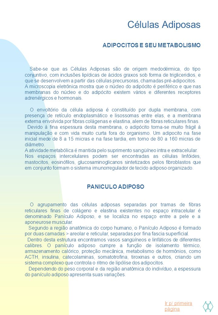 Células Adiposas ADIPOCITOS E SEU METABOLISMO PANICULO ADIPOSO