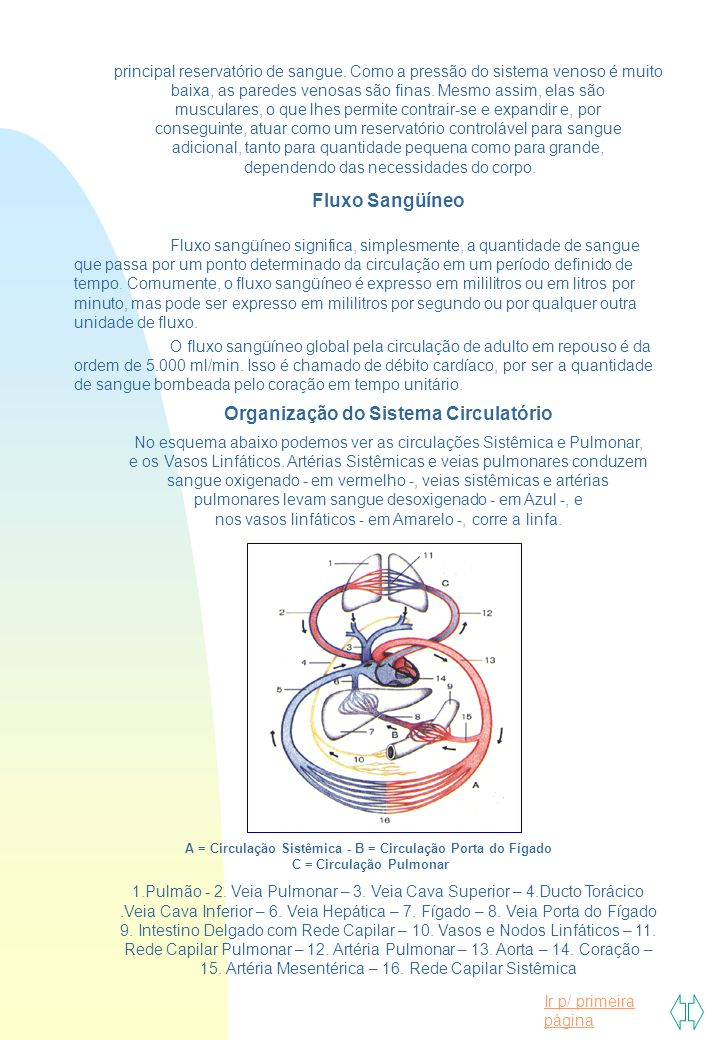 Organização do Sistema Circulatório