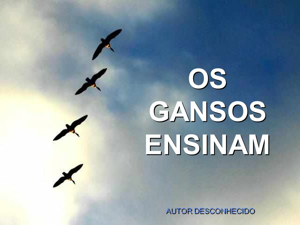 OS GANSOS ENSINAM AUTOR DESCONHECIDO