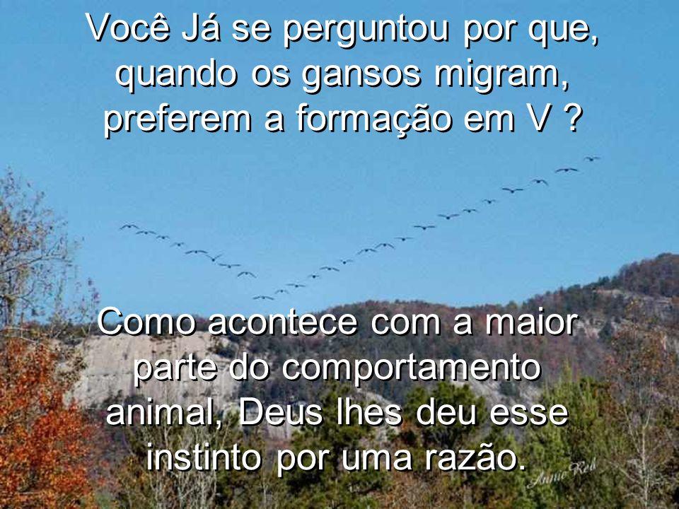 Você Já se perguntou por que, quando os gansos migram, preferem a formação em V