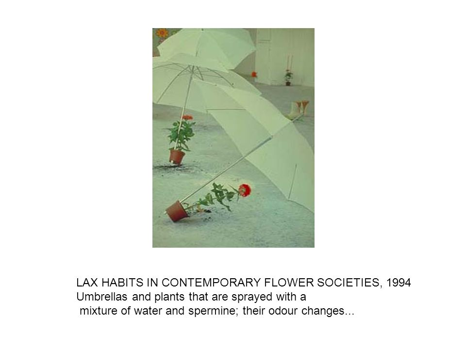 LAX HABITS IN CONTEMPORARY FLOWER SOCIETIES, 1994 Umbrellas and plants that are sprayed with a