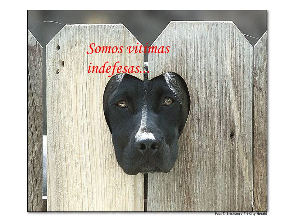 Somos vitimas indefesas...