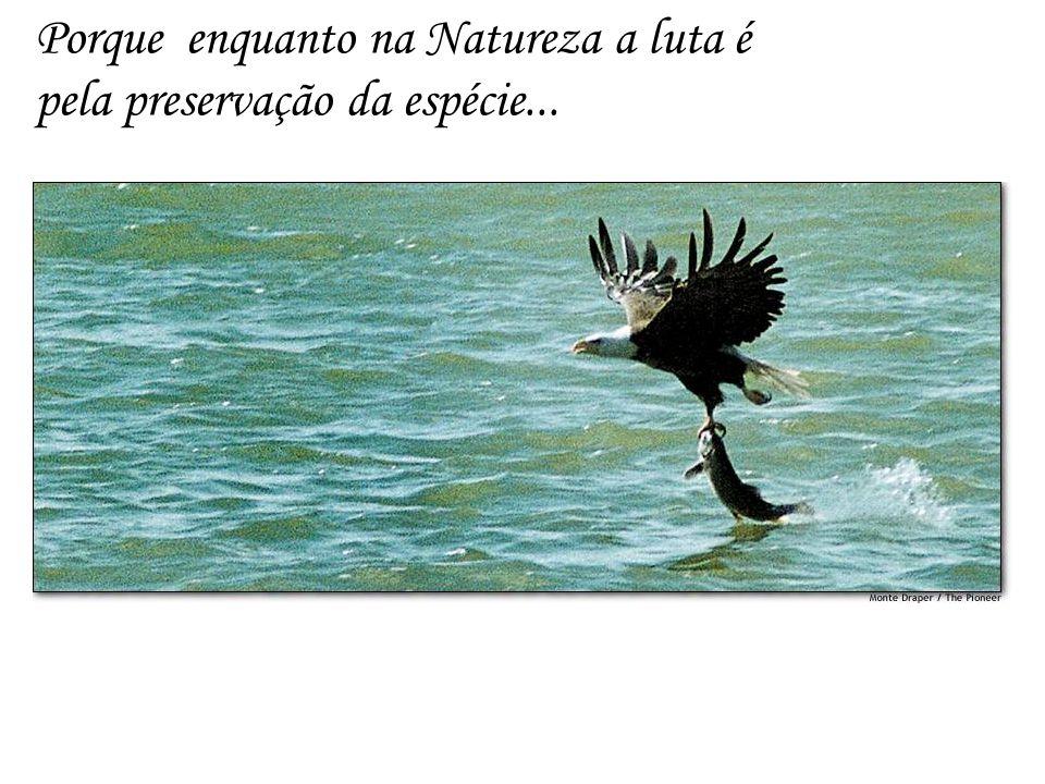 Porque enquanto na Natureza a luta é