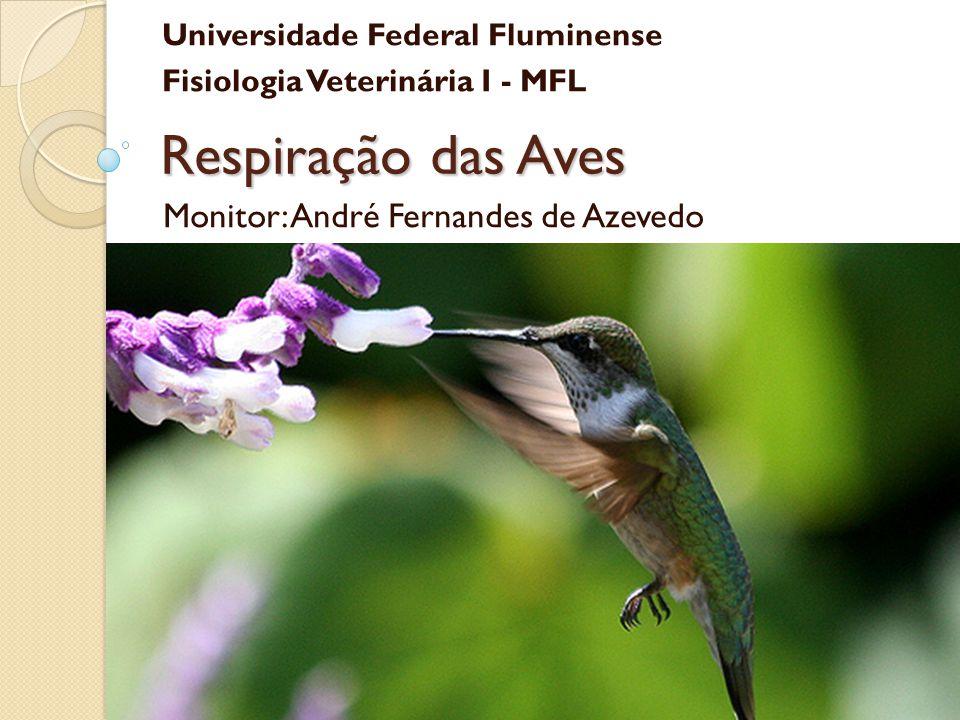 Monitor: André Fernandes de Azevedo