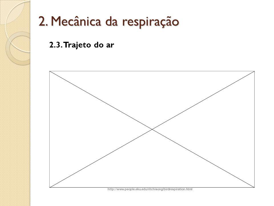 2. Mecânica da respiração