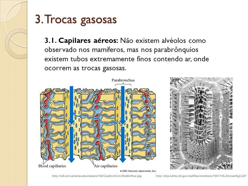 3. Trocas gasosas