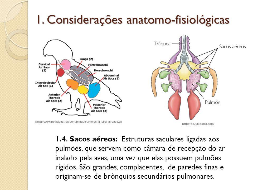 1. Considerações anatomo-fisiológicas