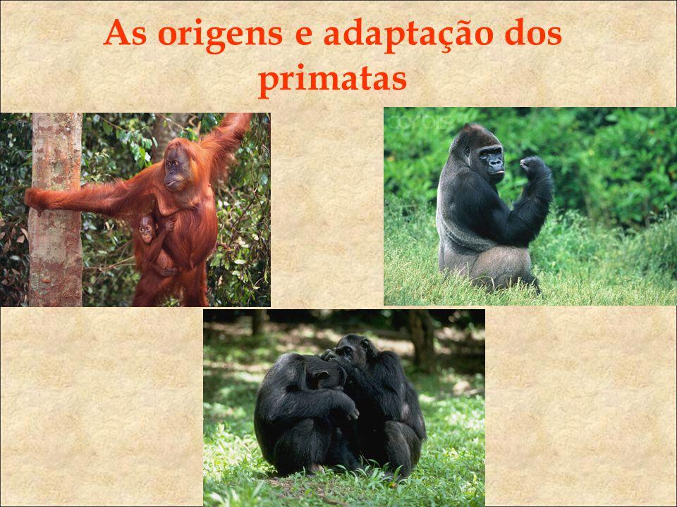 As origens e adaptação dos primatas