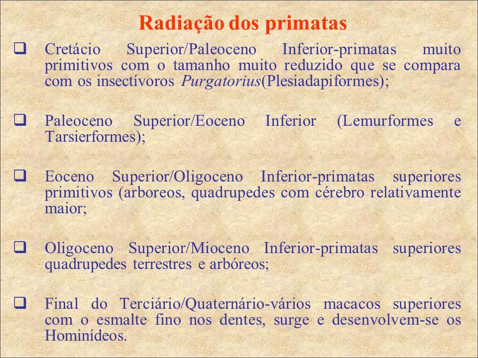 Radiação dos primatas