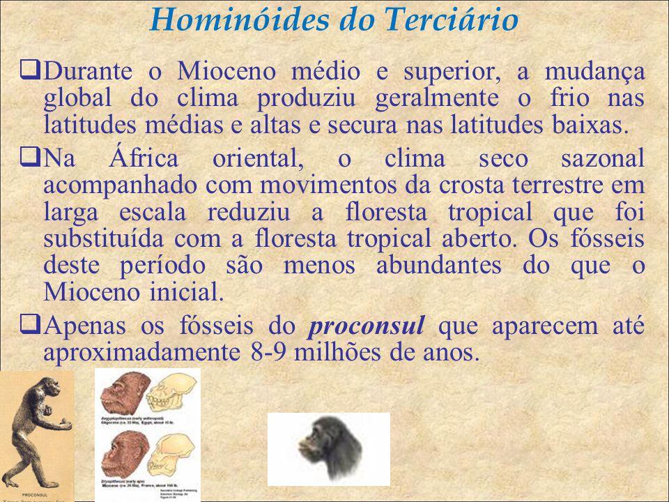 Hominóides do Terciário