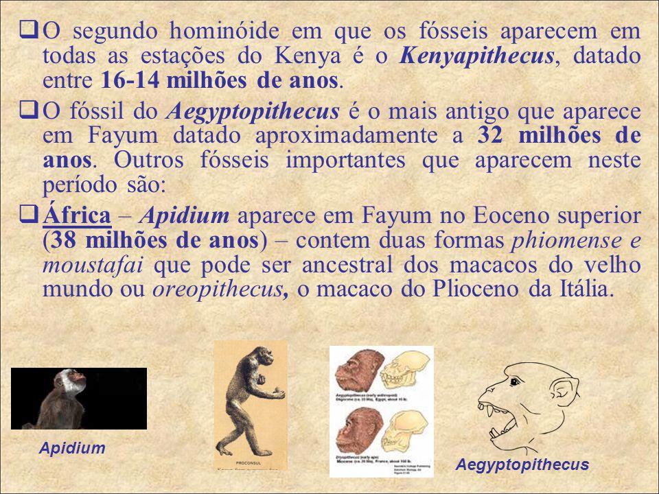 O segundo hominóide em que os fósseis aparecem em todas as estações do Kenya é o Kenyapithecus, datado entre 16-14 milhões de anos.