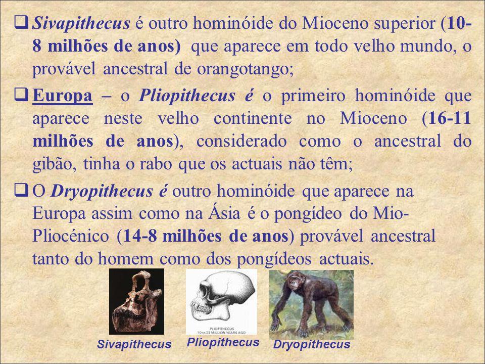 Sivapithecus é outro hominóide do Mioceno superior (10-8 milhões de anos) que aparece em todo velho mundo, o provável ancestral de orangotango;