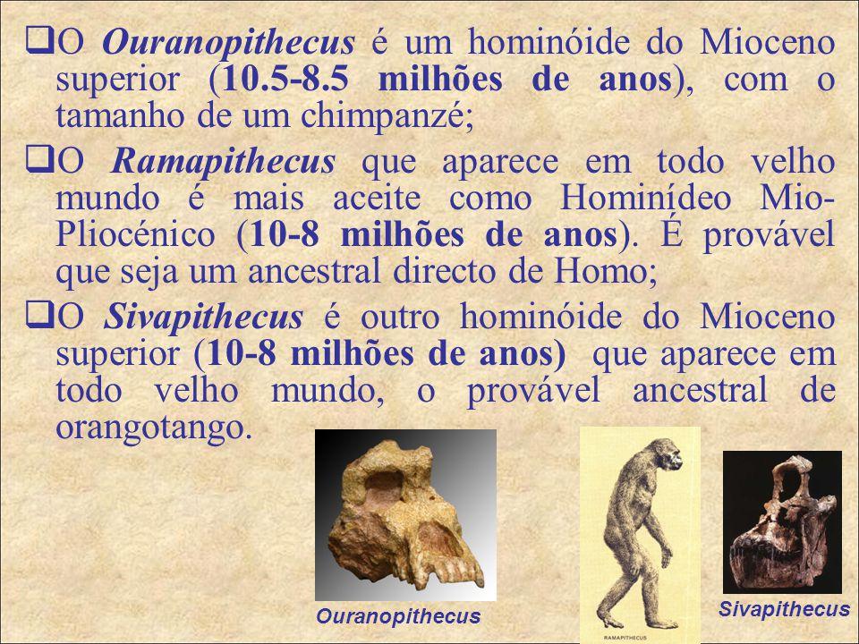O Ouranopithecus é um hominóide do Mioceno superior (10. 5-8