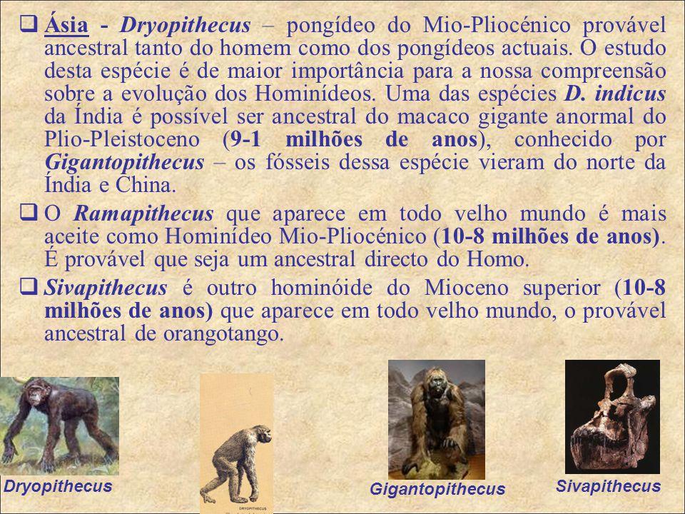 Ásia - Dryopithecus – pongídeo do Mio-Pliocénico provável ancestral tanto do homem como dos pongídeos actuais. O estudo desta espécie é de maior importância para a nossa compreensão sobre a evolução dos Hominídeos. Uma das espécies D. indicus da Índia é possível ser ancestral do macaco gigante anormal do Plio-Pleistoceno (9-1 milhões de anos), conhecido por Gigantopithecus – os fósseis dessa espécie vieram do norte da Índia e China.
