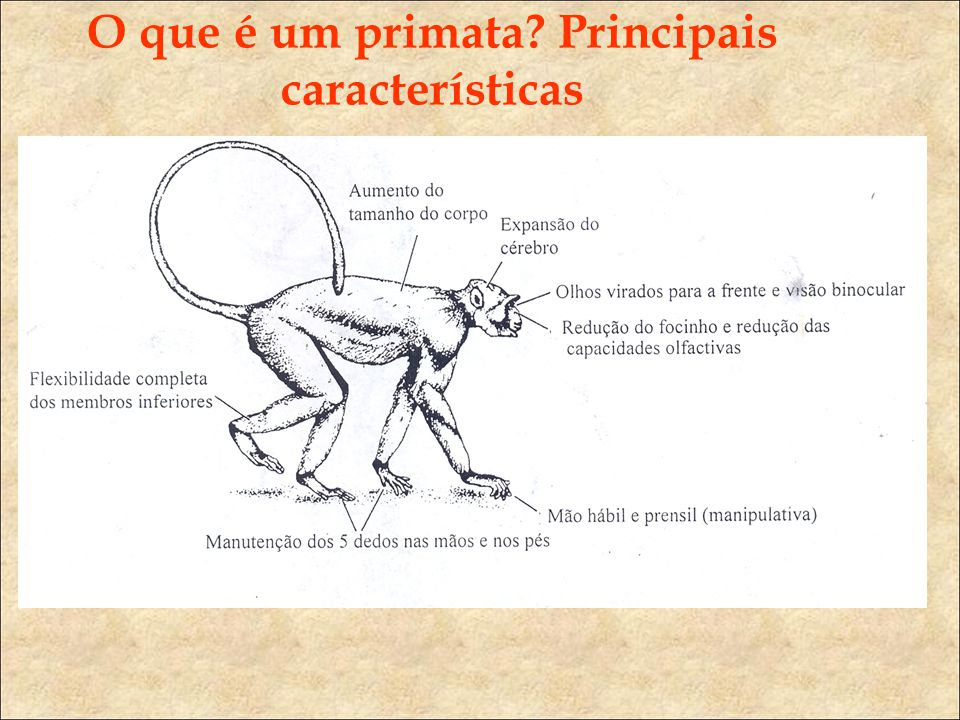 O que é um primata Principais características