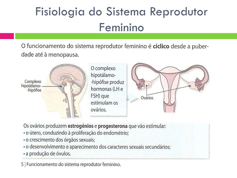 Fisiologia do Sistema Reprodutor Feminino