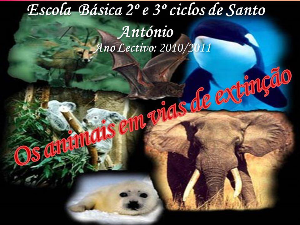 Escola Básica 2º e 3º ciclos de Santo António