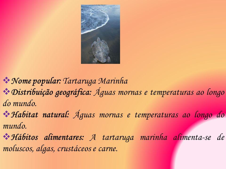 Nome popular: Tartaruga Marinha