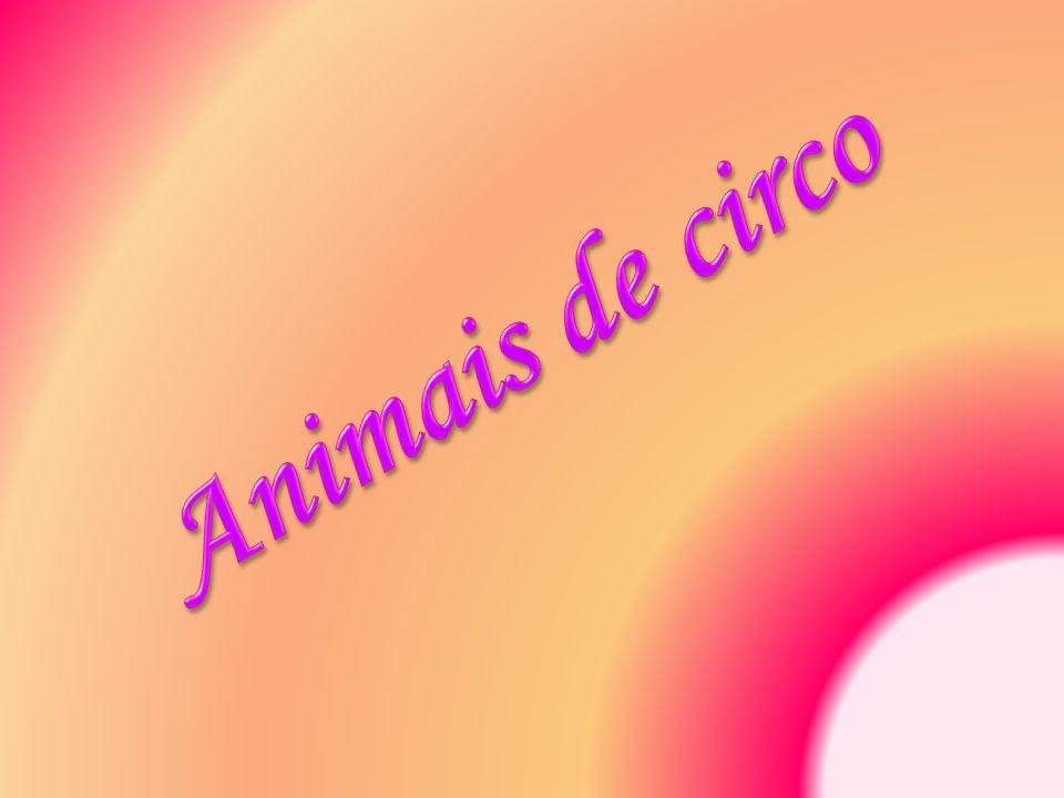 Animais de circo