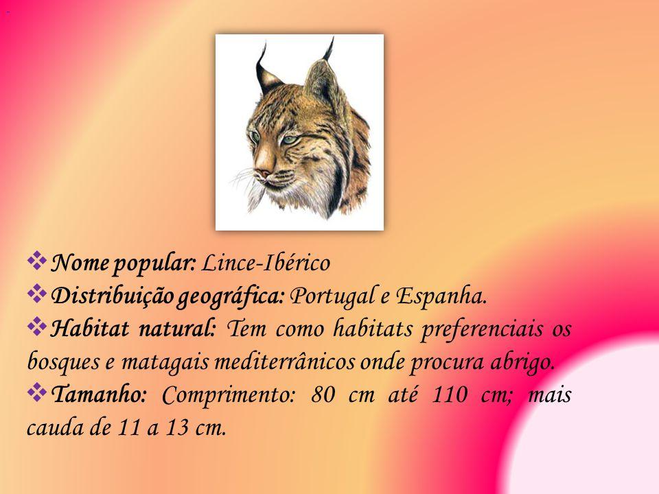 Nome popular: Lince-Ibérico
