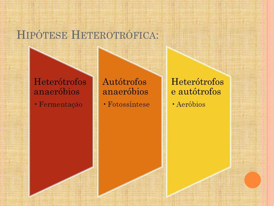 Hipótese Heterotrófica: