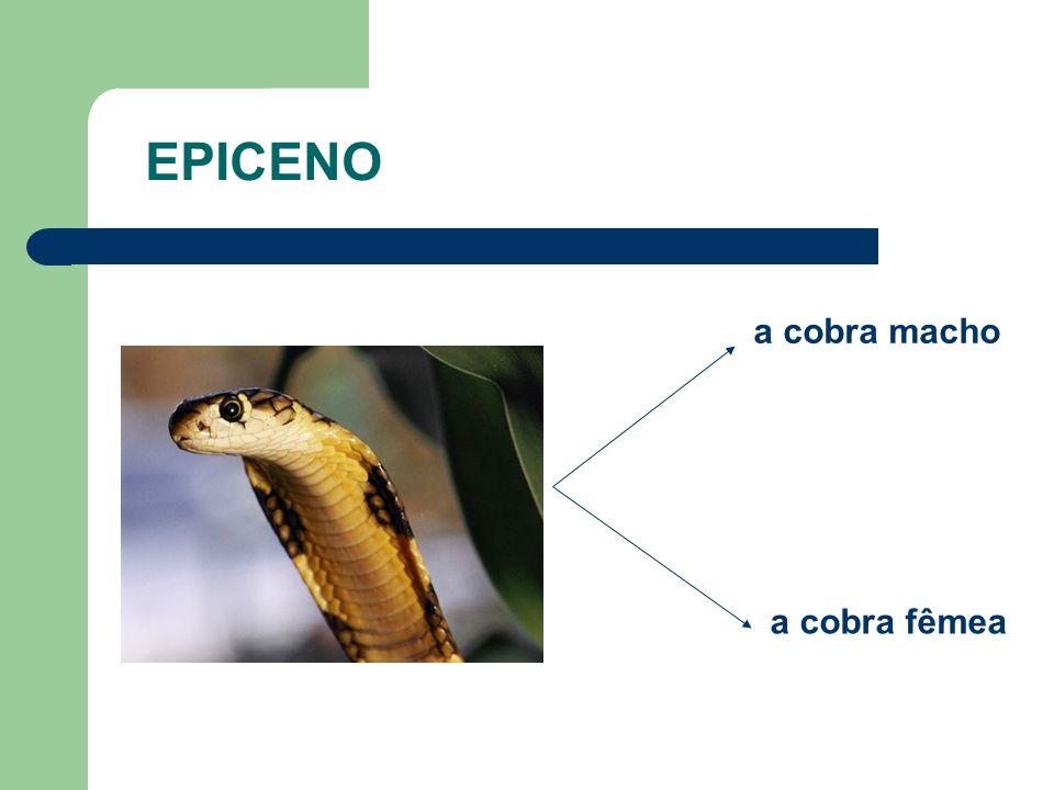 EPICENO a cobra macho a cobra fêmea