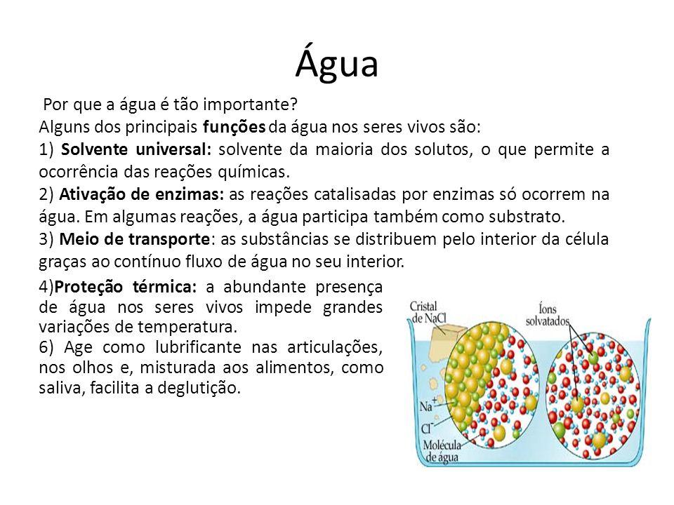 Água Por que a água é tão importante