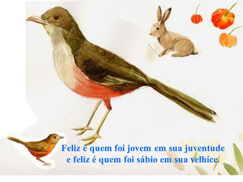 Feliz é quem foi jovem em sua juventude e feliz é quem foi sábio em sua velhice.