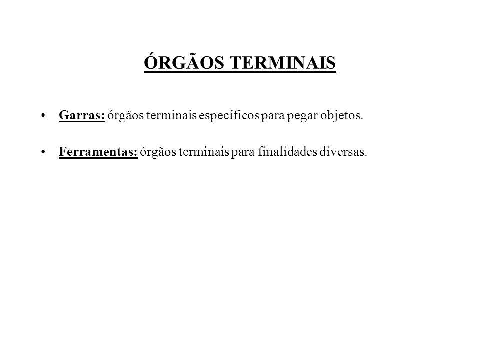 ÓRGÃOS TERMINAIS Garras: órgãos terminais específicos para pegar objetos.