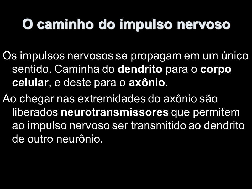 O caminho do impulso nervoso
