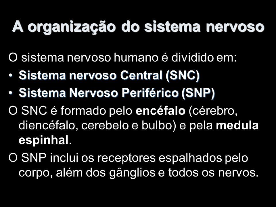 A organização do sistema nervoso