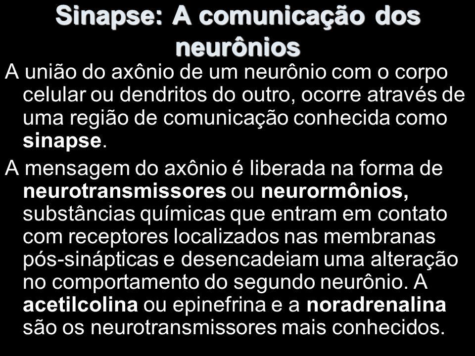 Sinapse: A comunicação dos neurônios