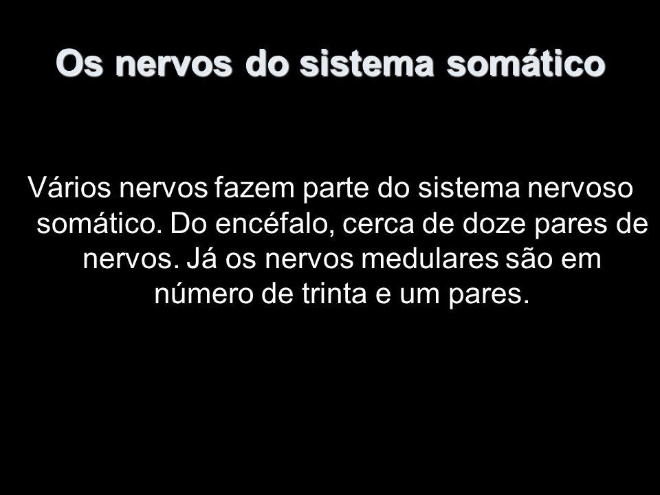 Os nervos do sistema somático