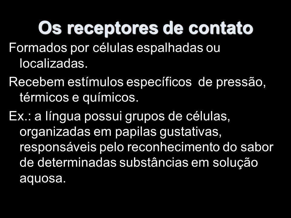 Os receptores de contato