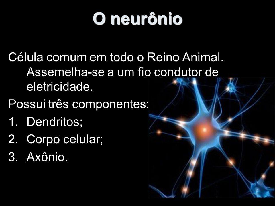 O neurônio Célula comum em todo o Reino Animal. Assemelha-se a um fio condutor de eletricidade. Possui três componentes: