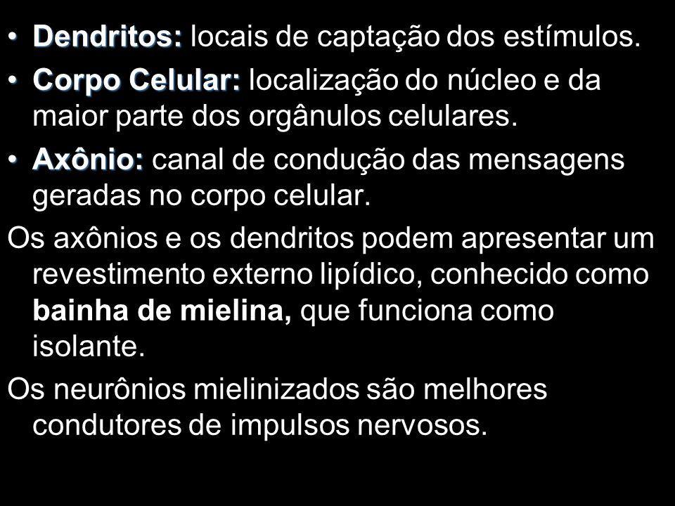 Dendritos: locais de captação dos estímulos.