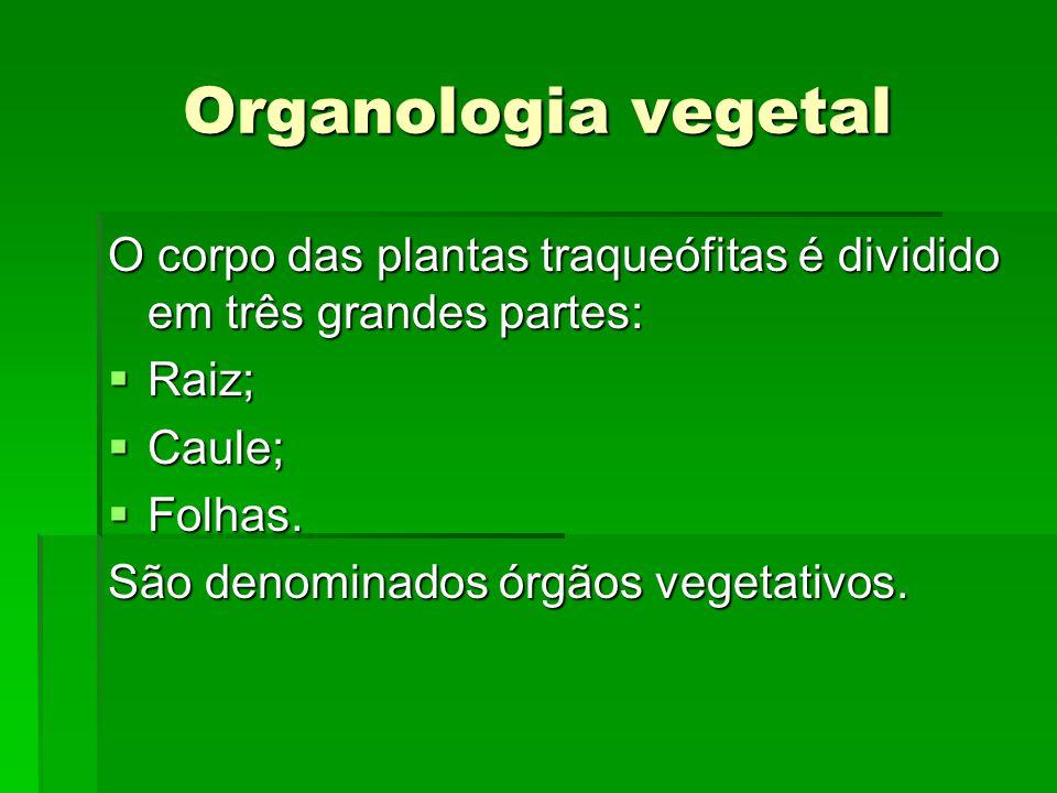 Organologia vegetal O corpo das plantas traqueófitas é dividido em três grandes partes: Raiz; Caule;