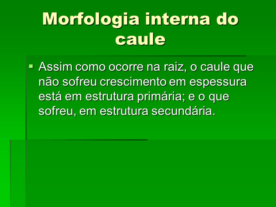 Morfologia interna do caule