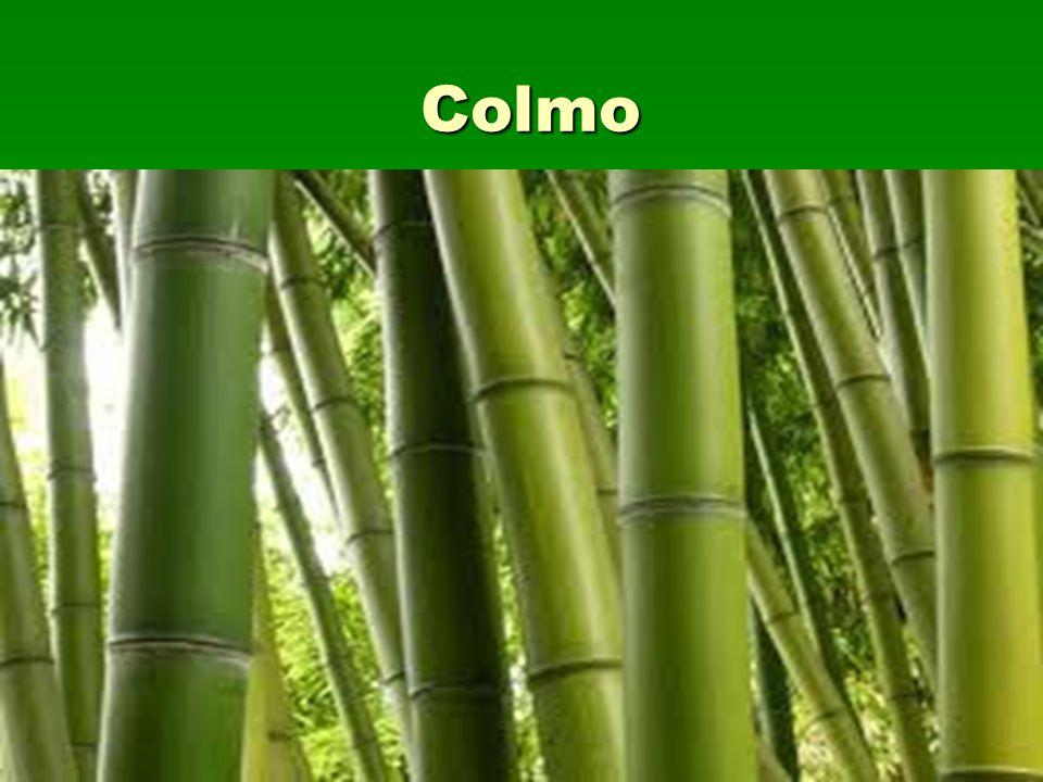 Colmo
