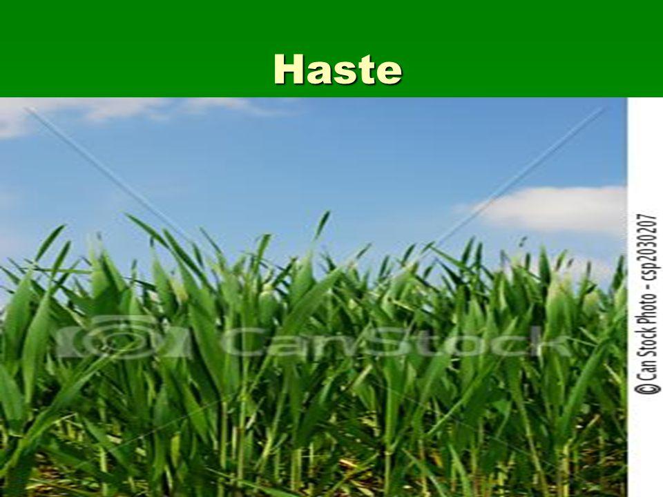 Haste