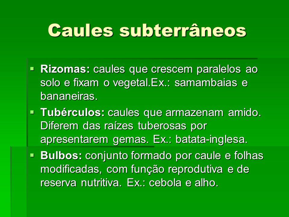 Caules subterrâneos Rizomas: caules que crescem paralelos ao solo e fixam o vegetal.Ex.: samambaias e bananeiras.