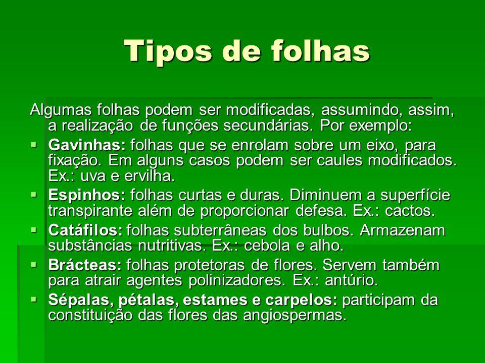 Tipos de folhas Algumas folhas podem ser modificadas, assumindo, assim, a realização de funções secundárias. Por exemplo: