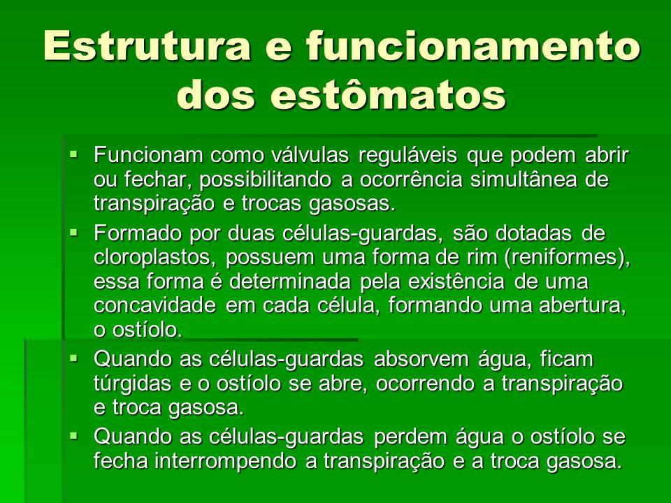 Estrutura e funcionamento dos estômatos
