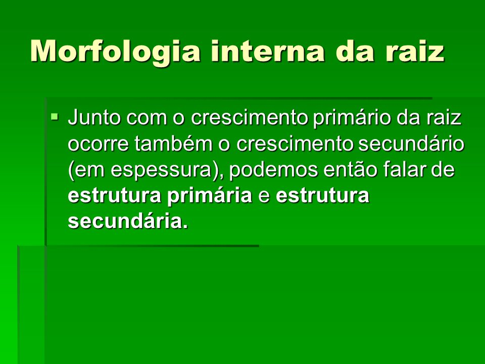 Morfologia interna da raiz